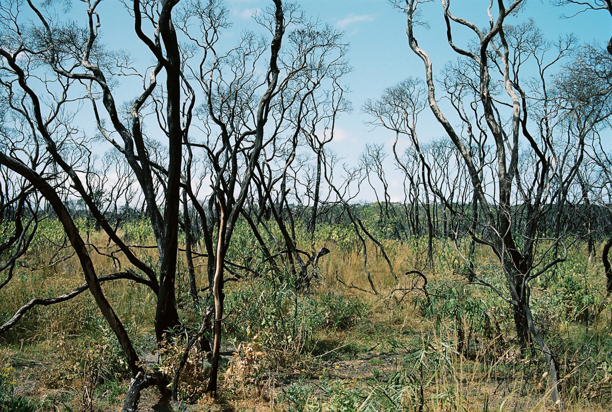 Bushfire damage outside Melbourne