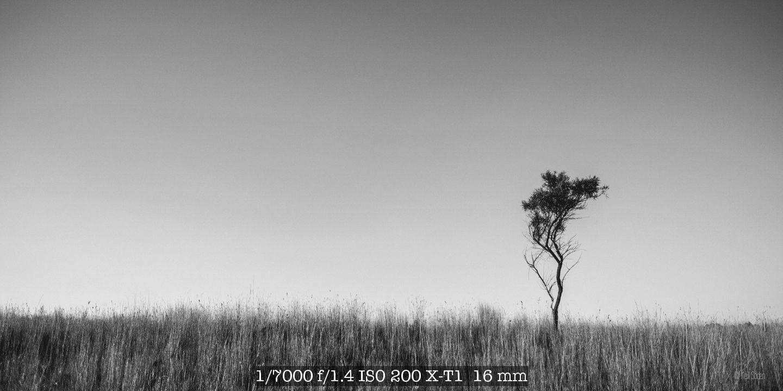 DSCF4708.jpg