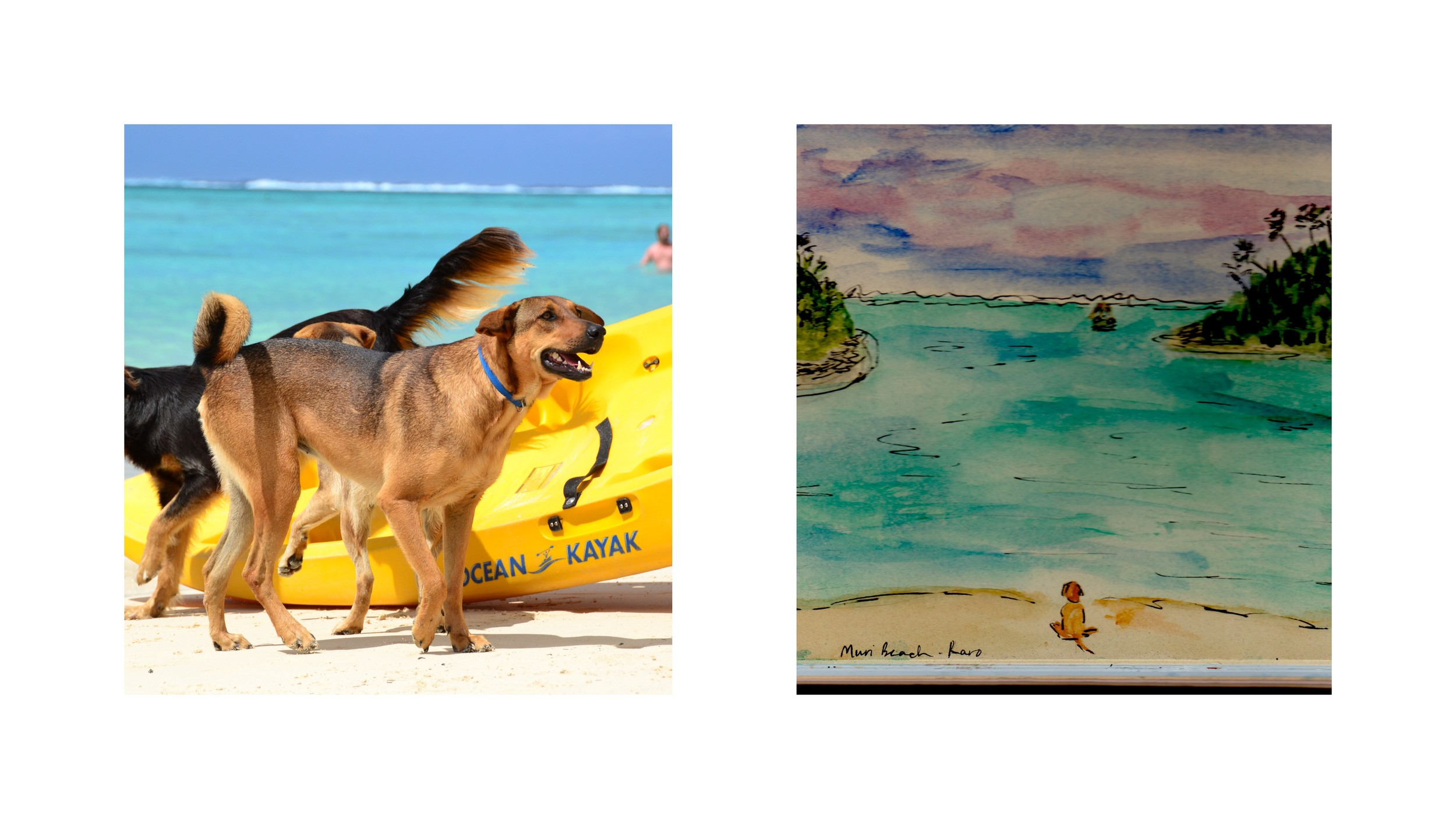 Walker, A.  Dogs of Muri Beach , Photograph and Watercolor, 2013
