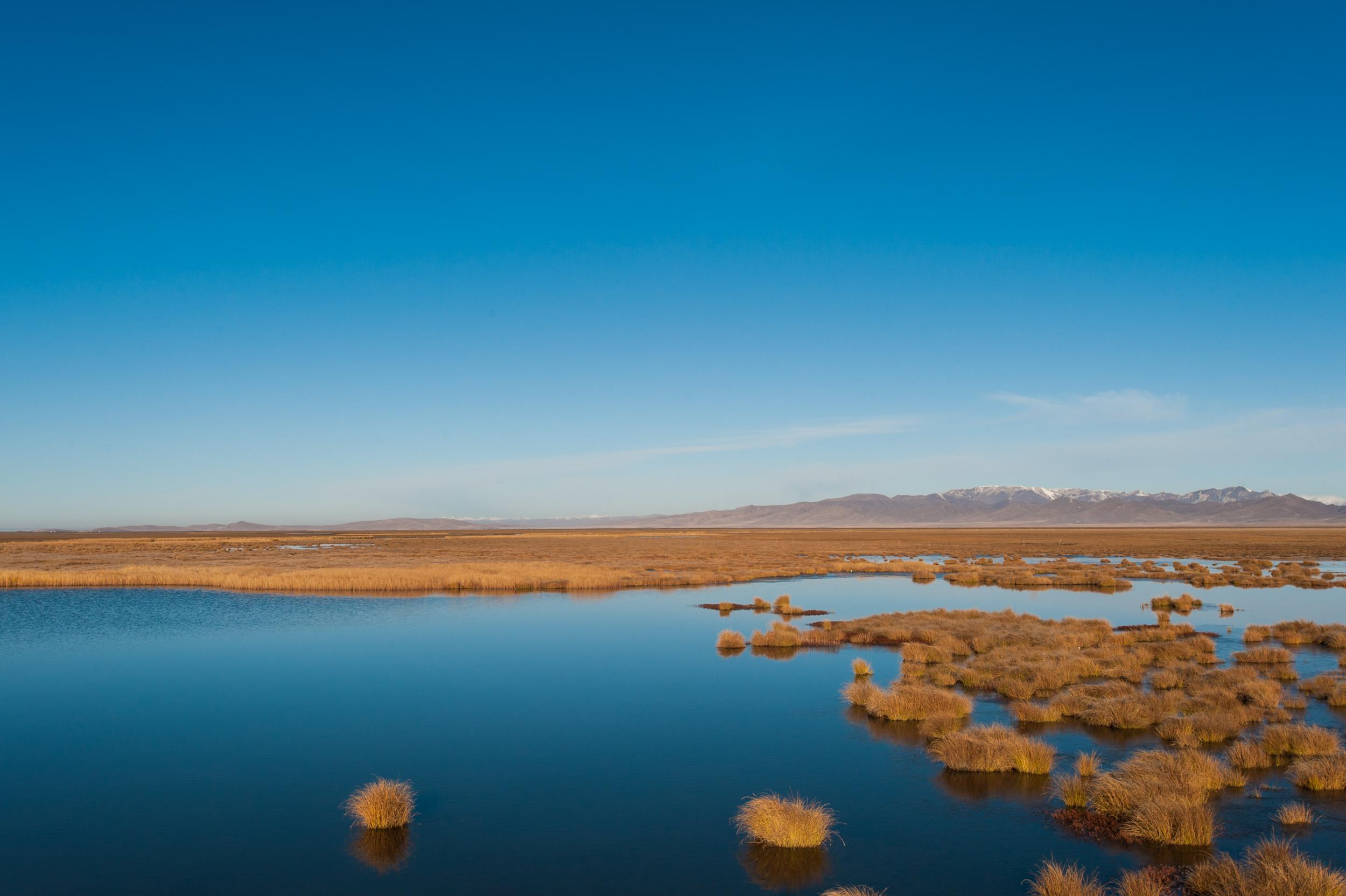 Wetlands _DSC8706.jpg