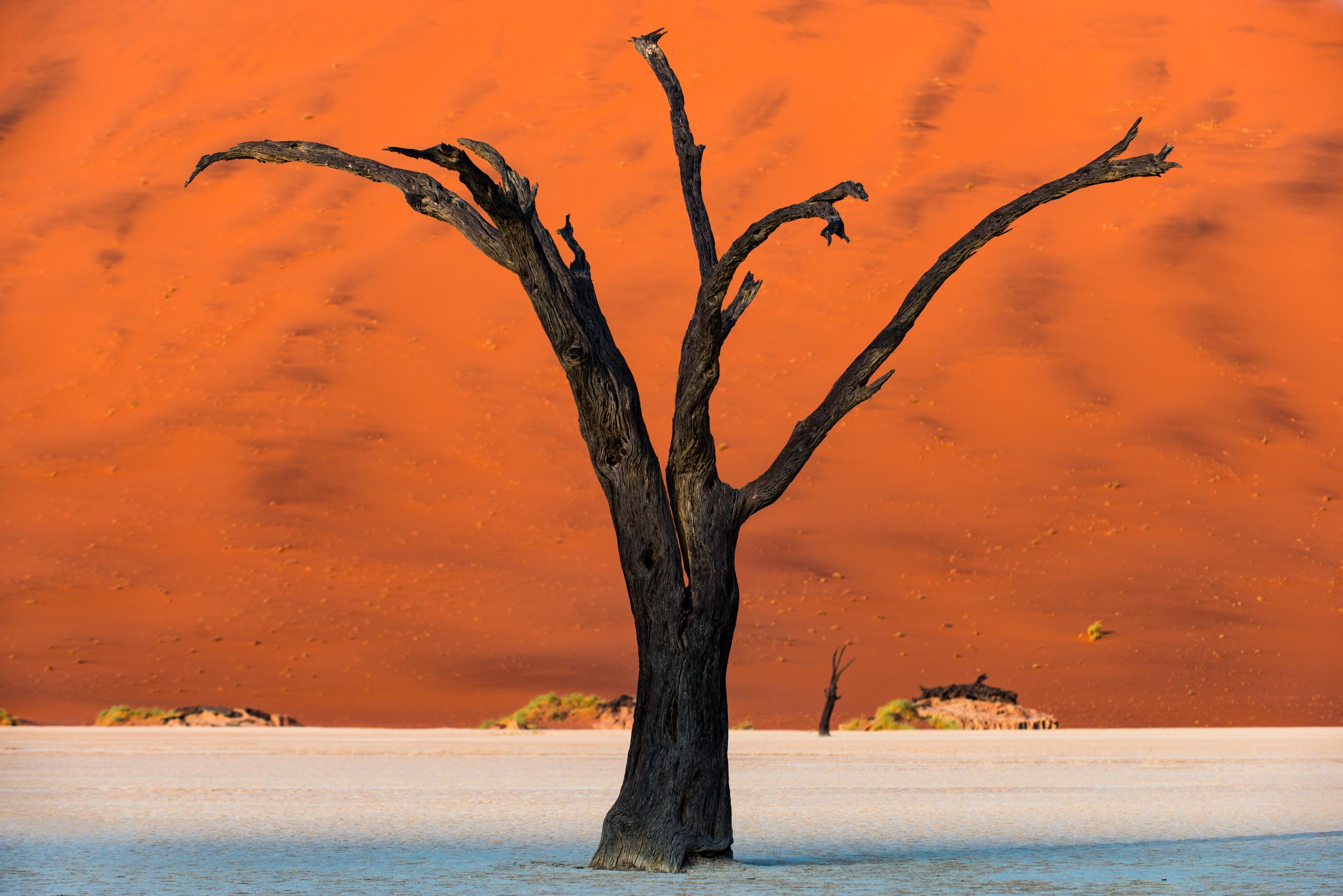 Deadvlei  Namibia desert