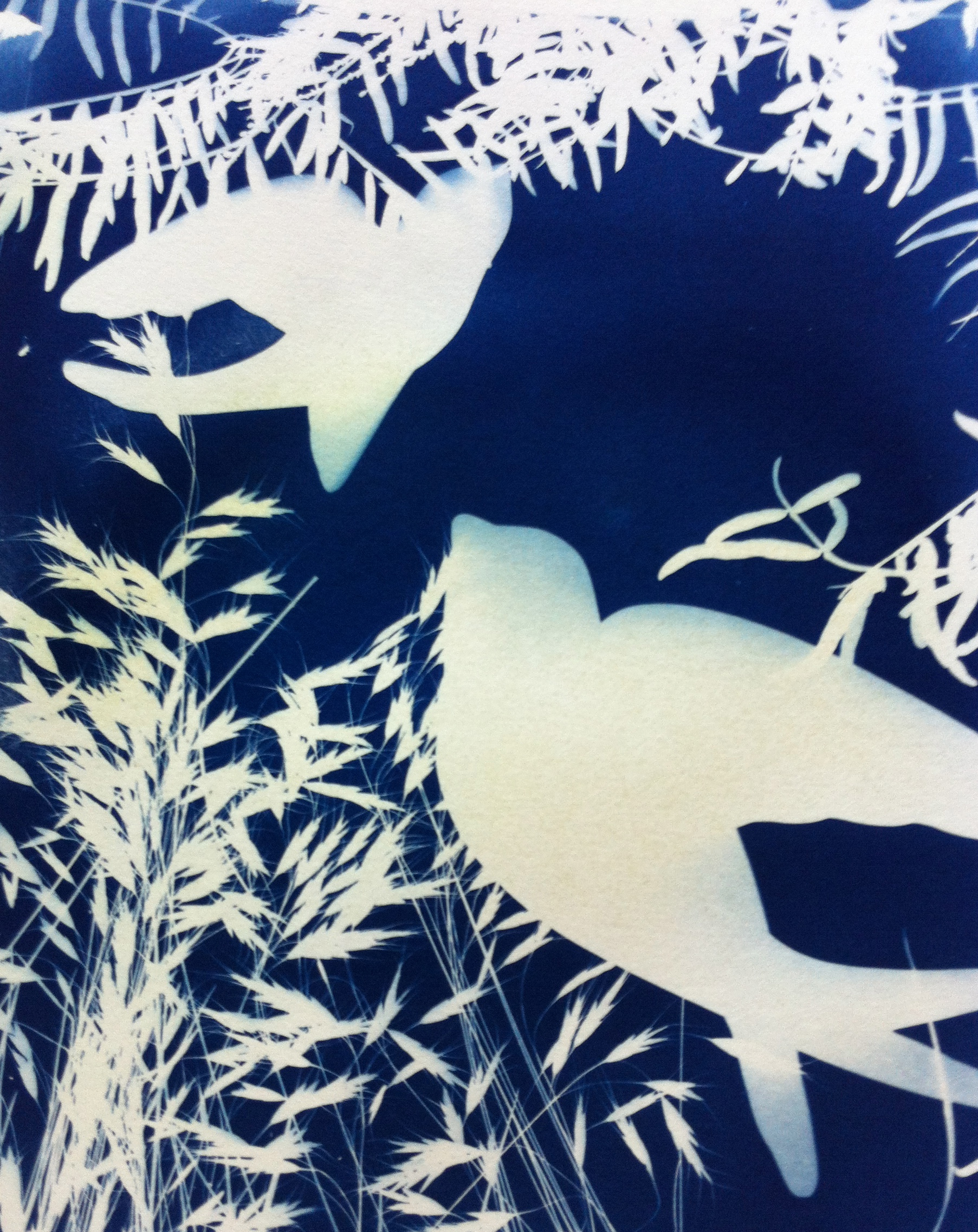 Flight   12x12 cyanotype