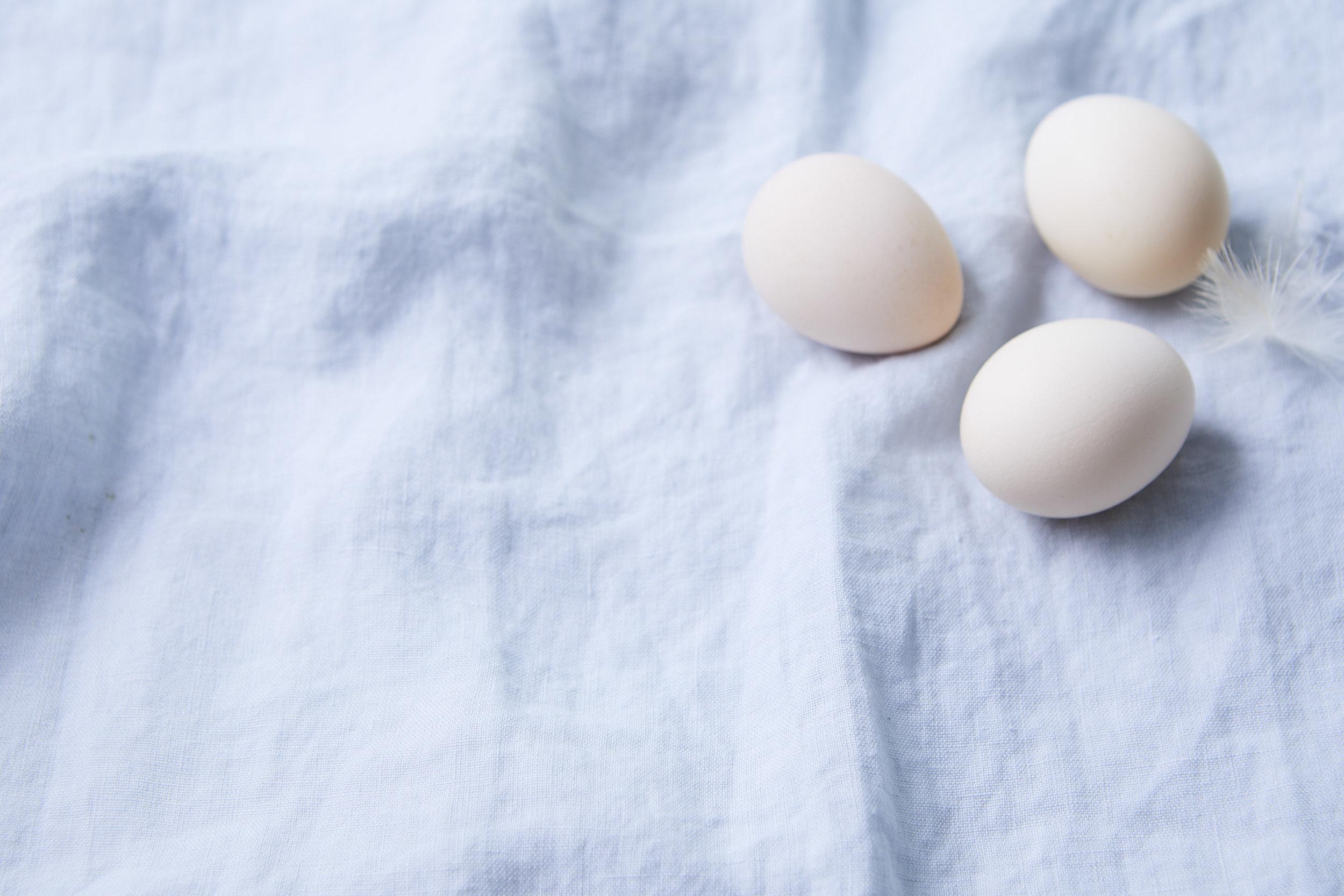 filler_eggs2.jpg