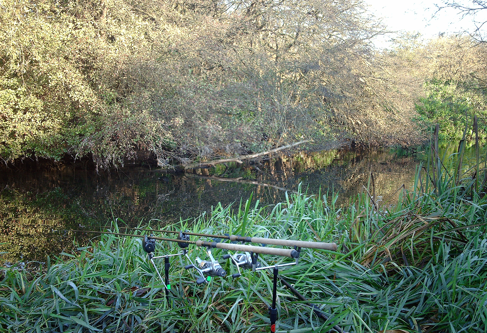 Barbel fishing at Fishers Green, on the river Lea