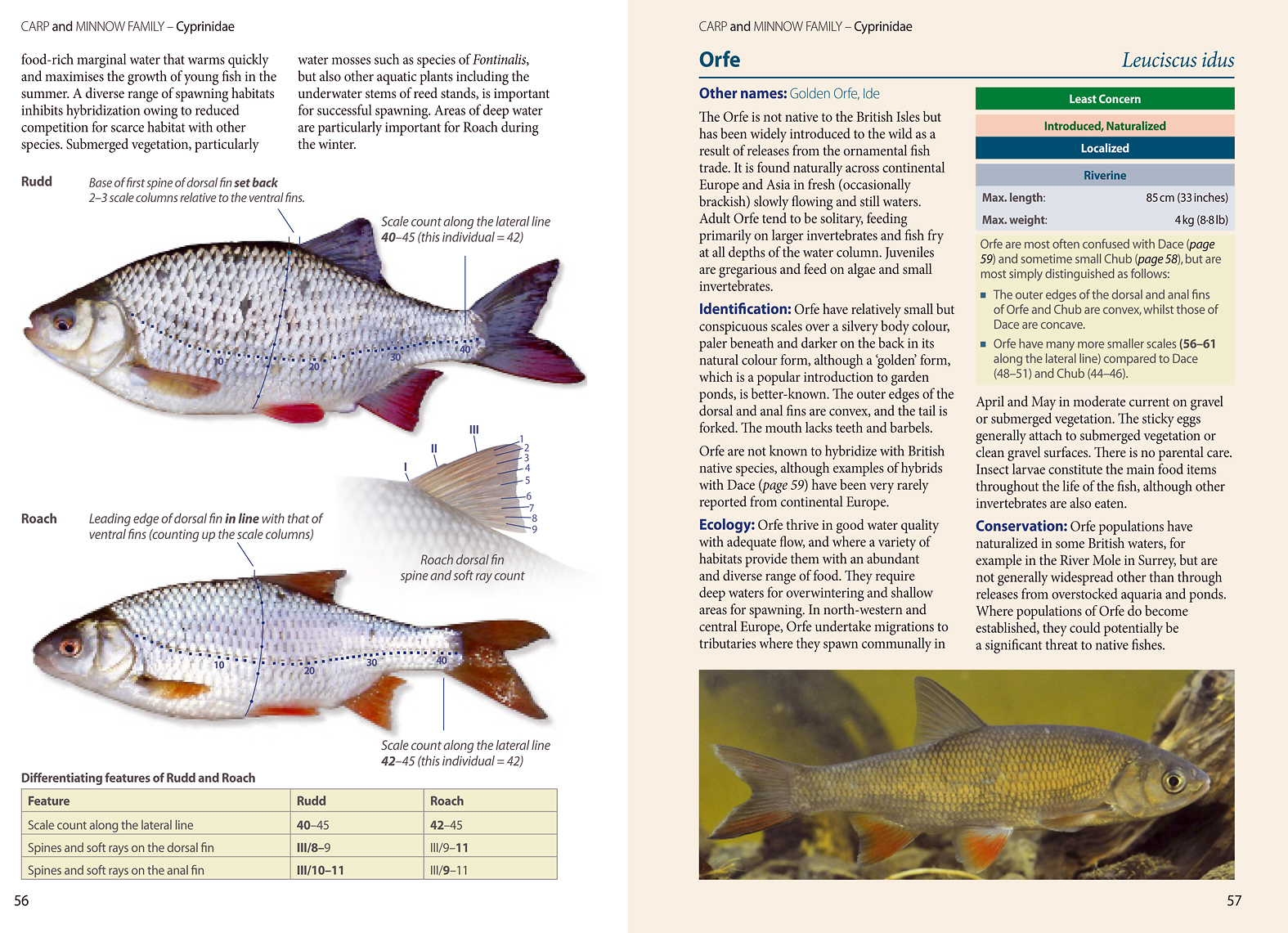 As an in-depth reference book on native fish species, this one's hard to beat