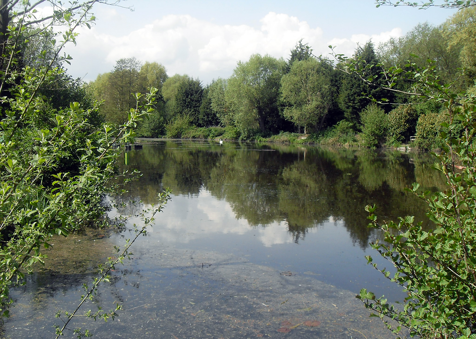A lovely little club water is our venue for a bit of tench fishing