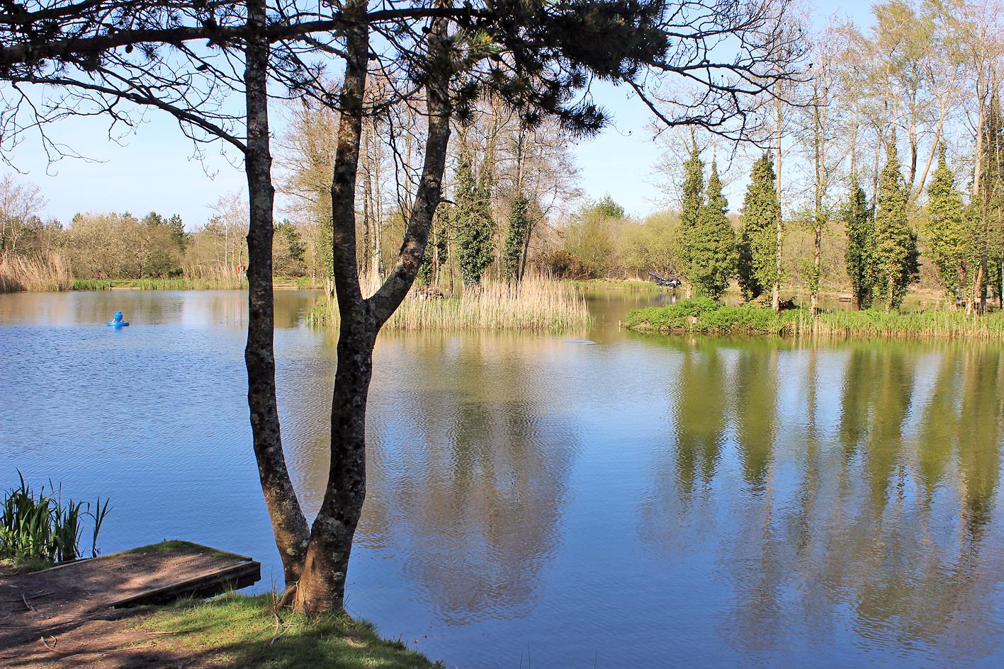 Sycamore lake