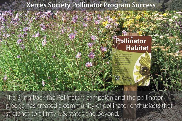Bring Back the Pollinators campaign.jpg