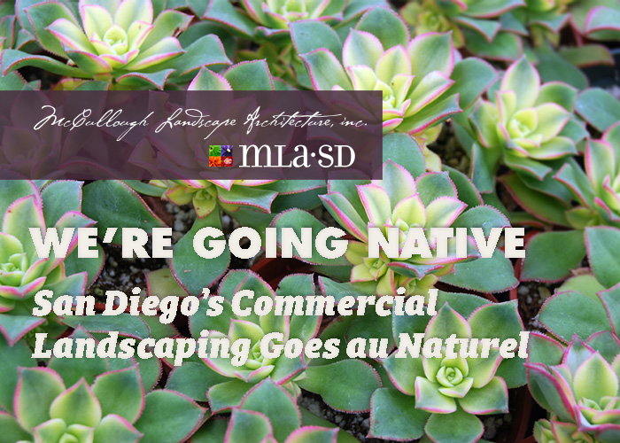 MLA: We're Going Native : San Diego Commercial Landscaping Goes au Naturel