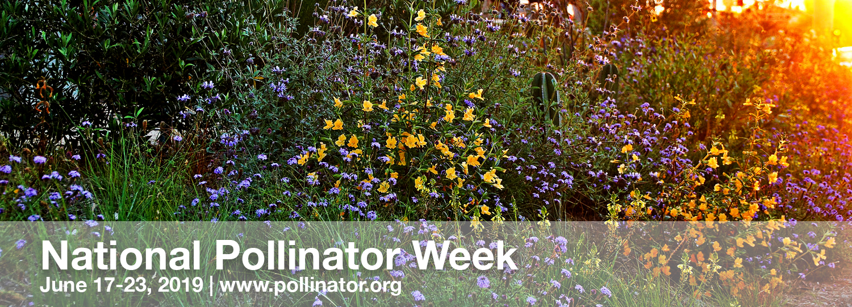 pollinator-header.jpg