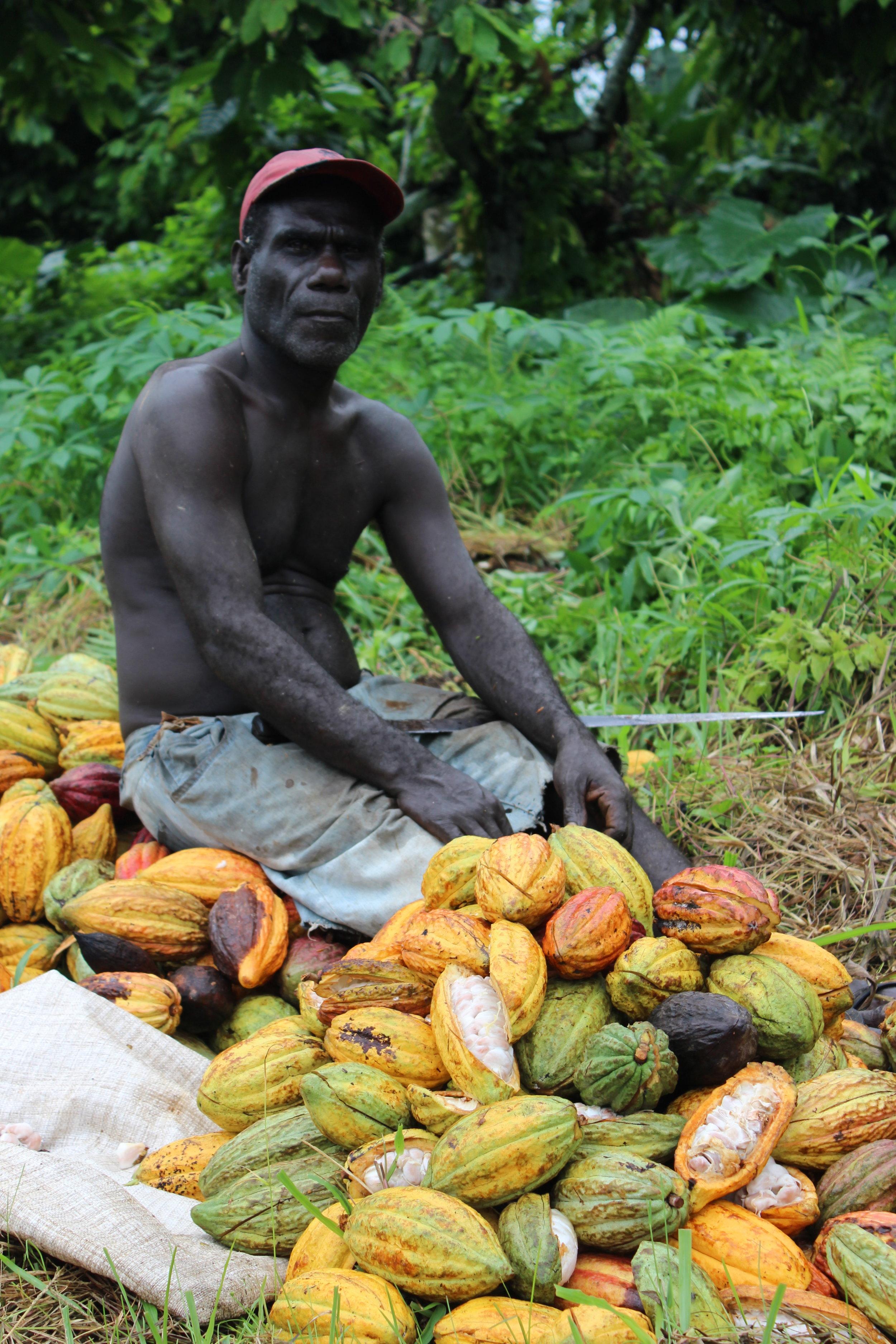 Cocoa farmer at origin in the Solomon Islands.