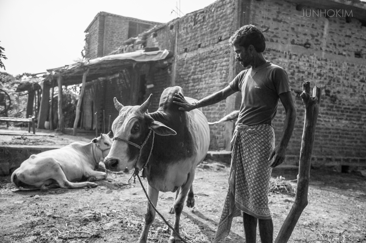 A man with his precious cow