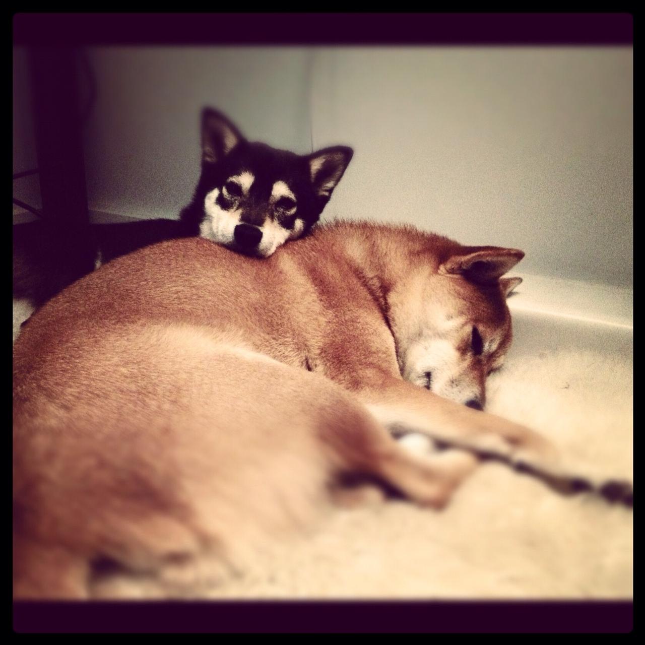 Emi lying on Shio