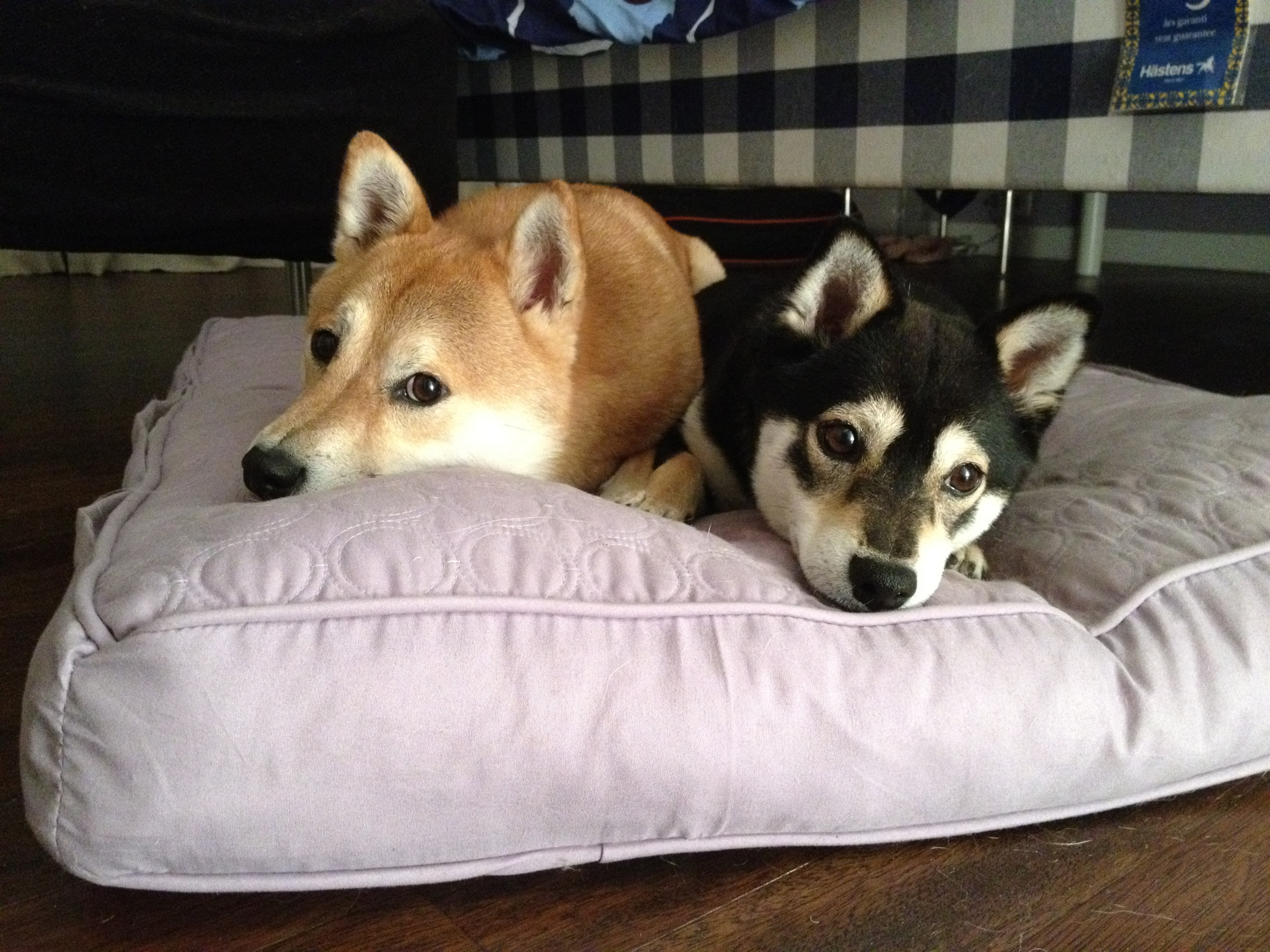 Sharing a bed