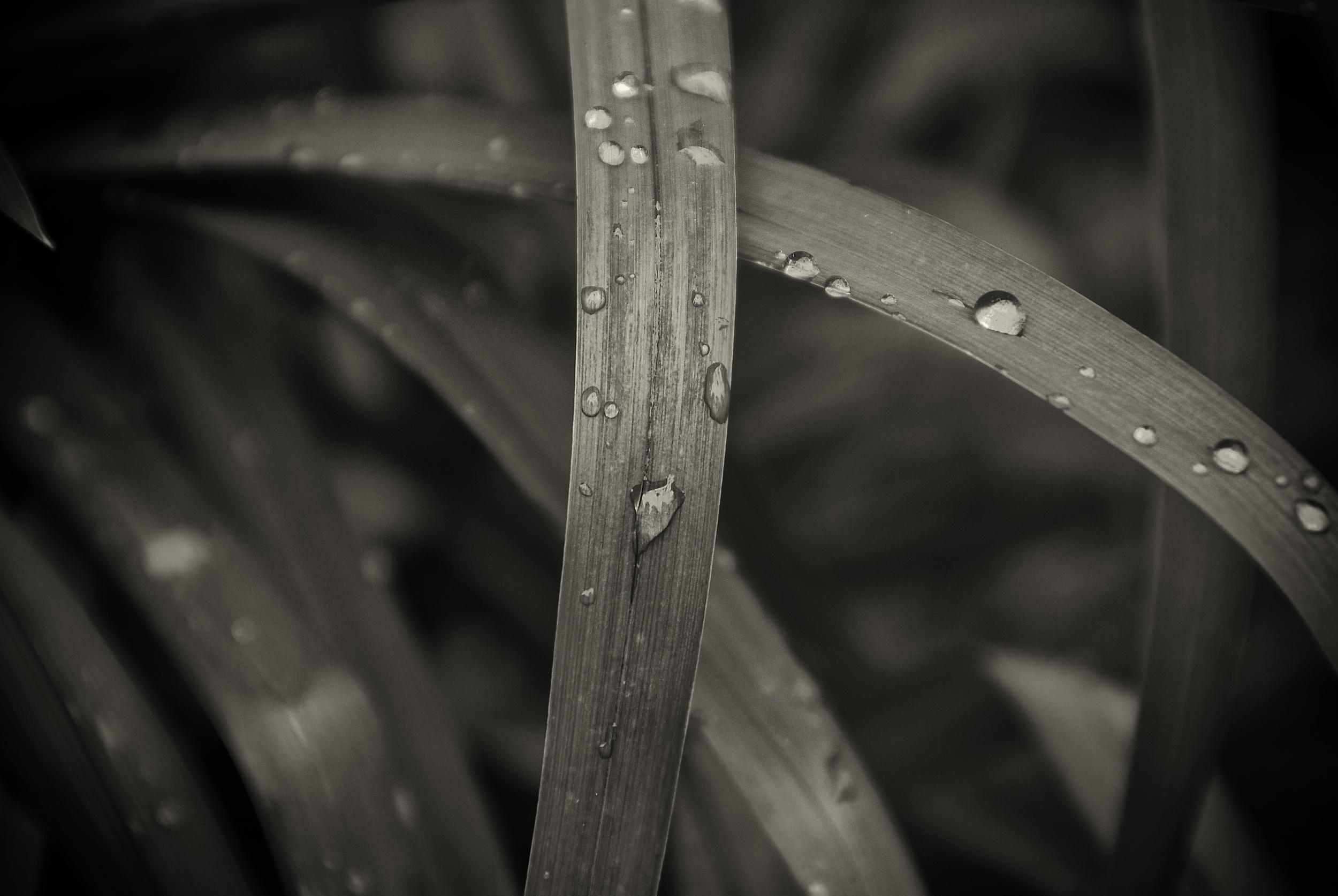 Grass_Drops.jpg
