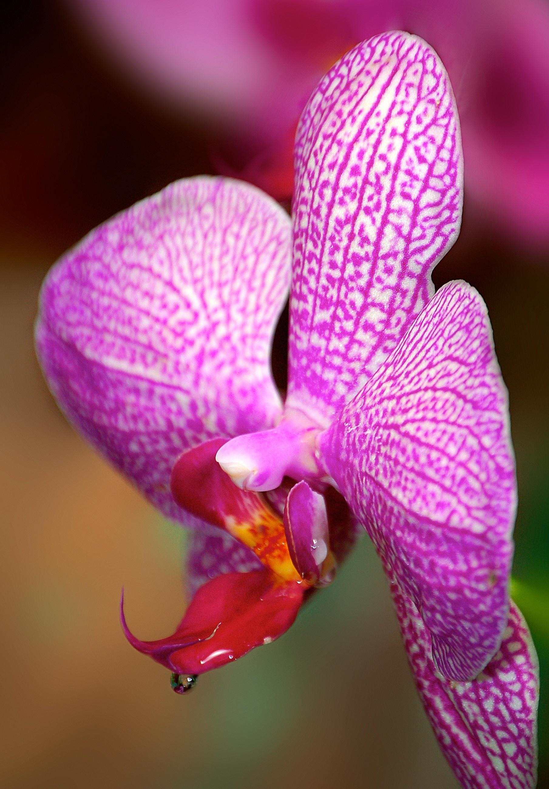 Orchid Thirst.jpg
