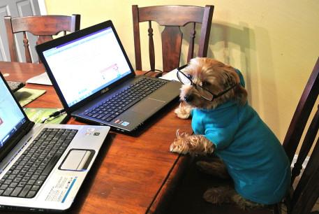 workingdog2.JPG