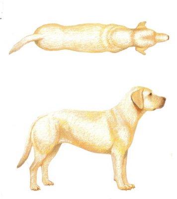 fatdog.jpg