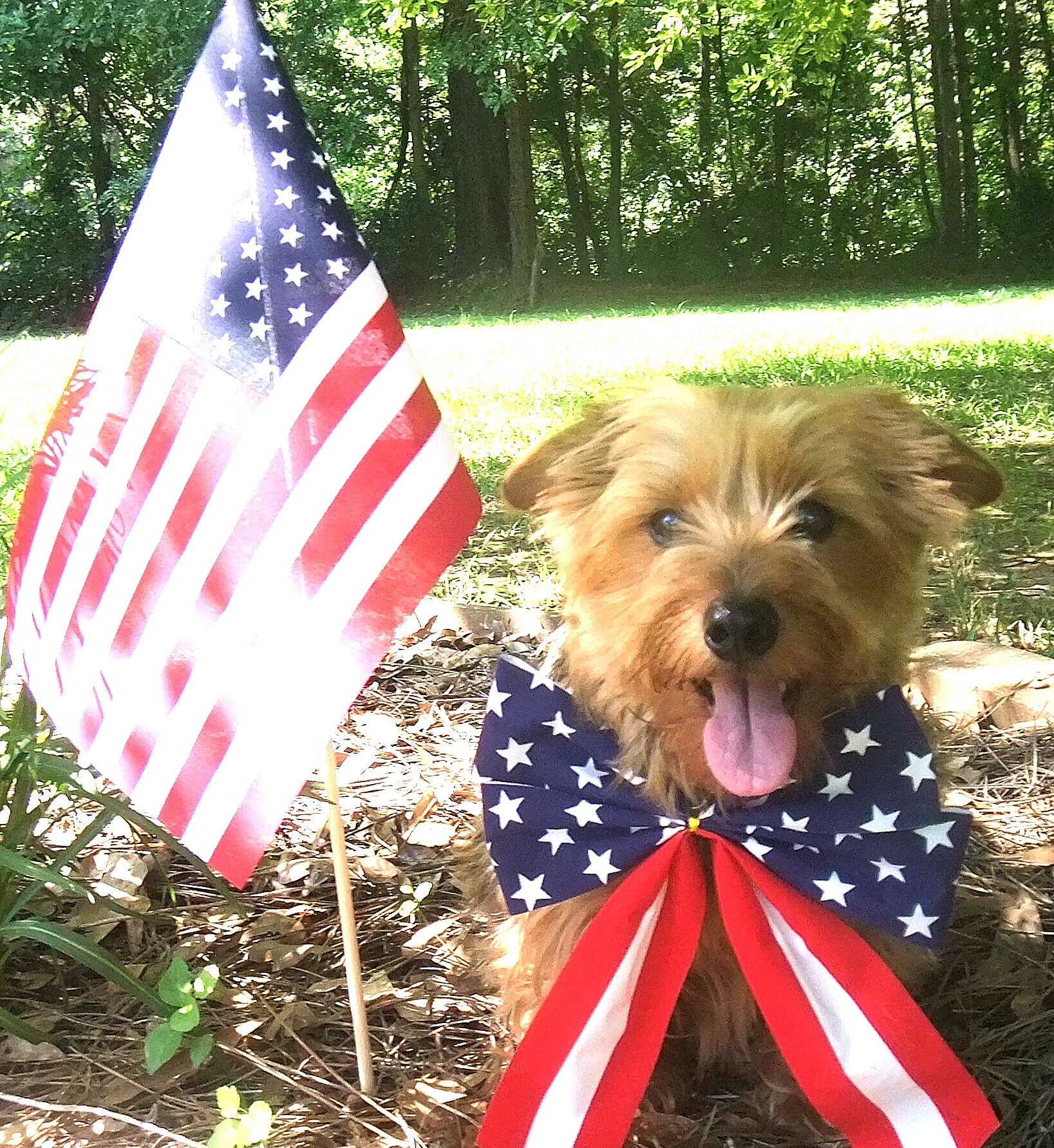 Kirby says Happy 4th of July