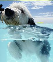 swimdog.jpg