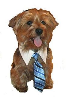Collar & Tie