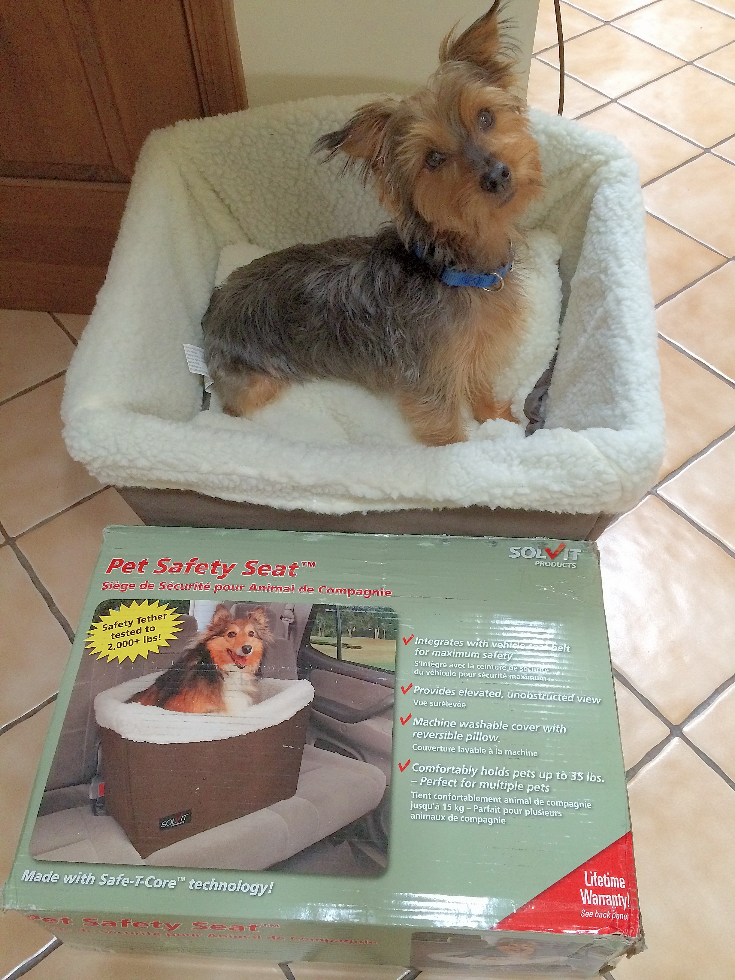 Our Winner showing off his new Pet Safety Seat from Solvit: Johnny the Dog