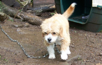 chained dog.jpg