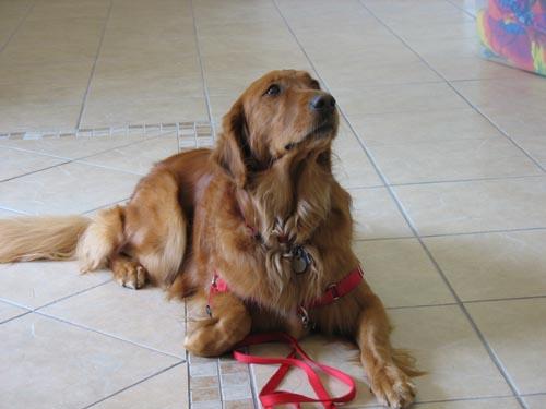 Photo Courtesy of Therese Kopiwoda  Austin Pet First Aid .