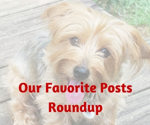 favorite-posts-roundup.jpg