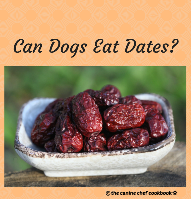 Can Dogs Eat Dates? — The Canine Chef