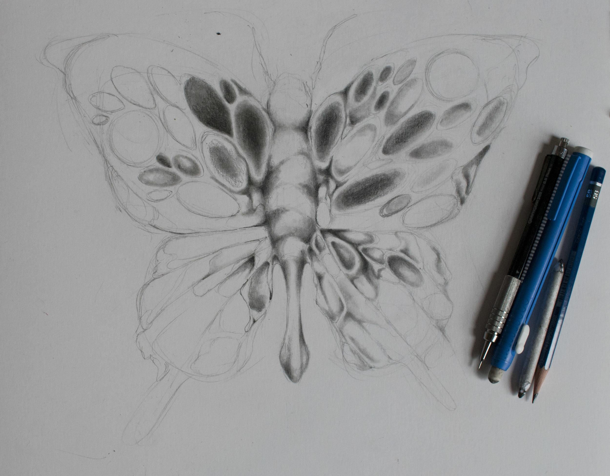 ButterflyBlogWIP1.jpg