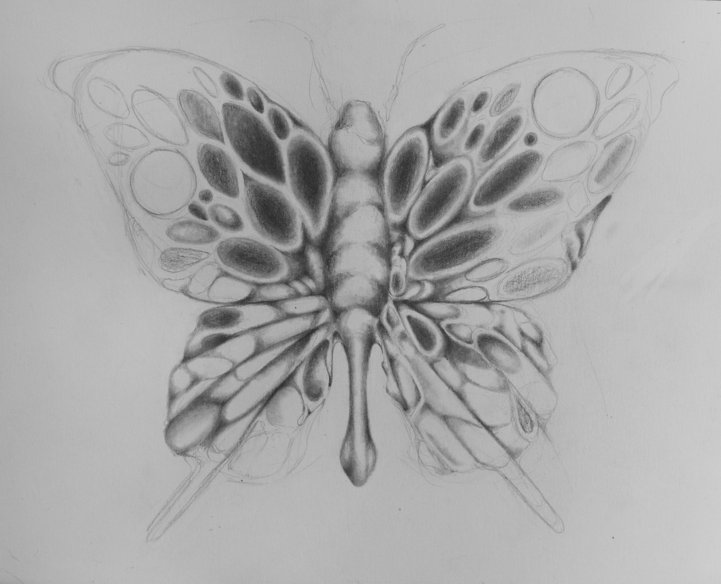 ButterflyBlogWIP2.jpg