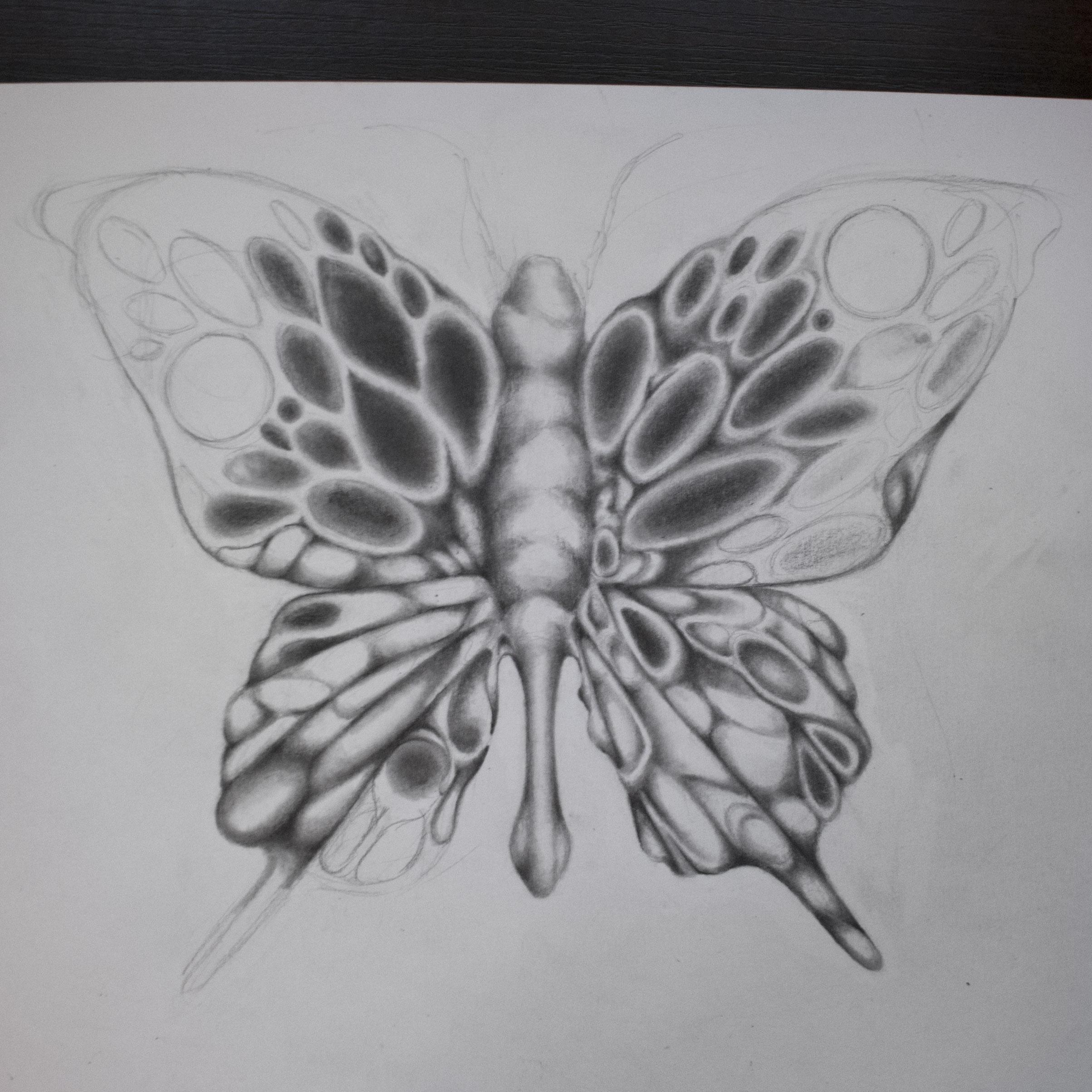 ButterflyBlogWIP3.jpg