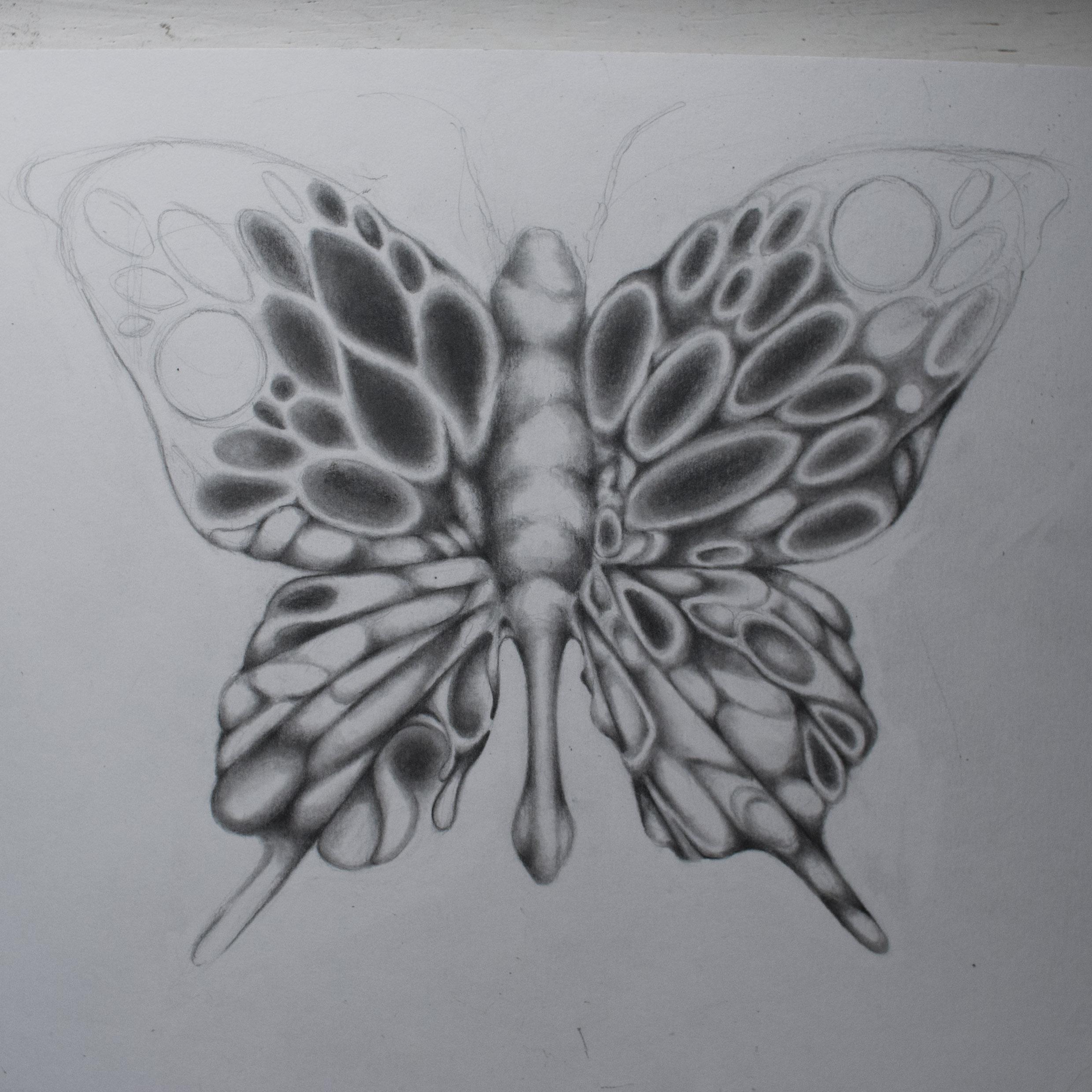 ButterflyBlogWIP4.jpg