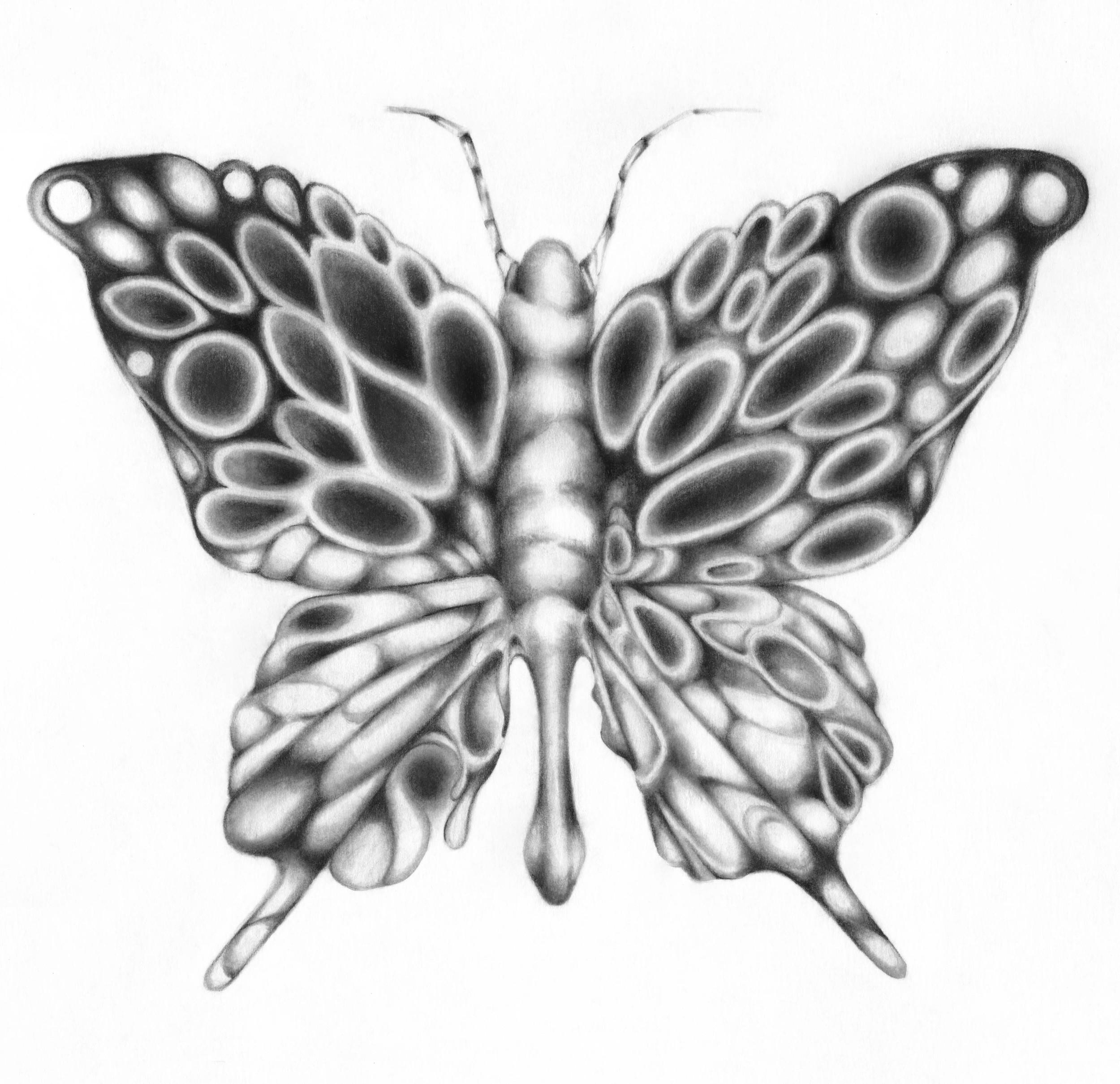 Butterfly_Illustration_Adrianna_Grezak