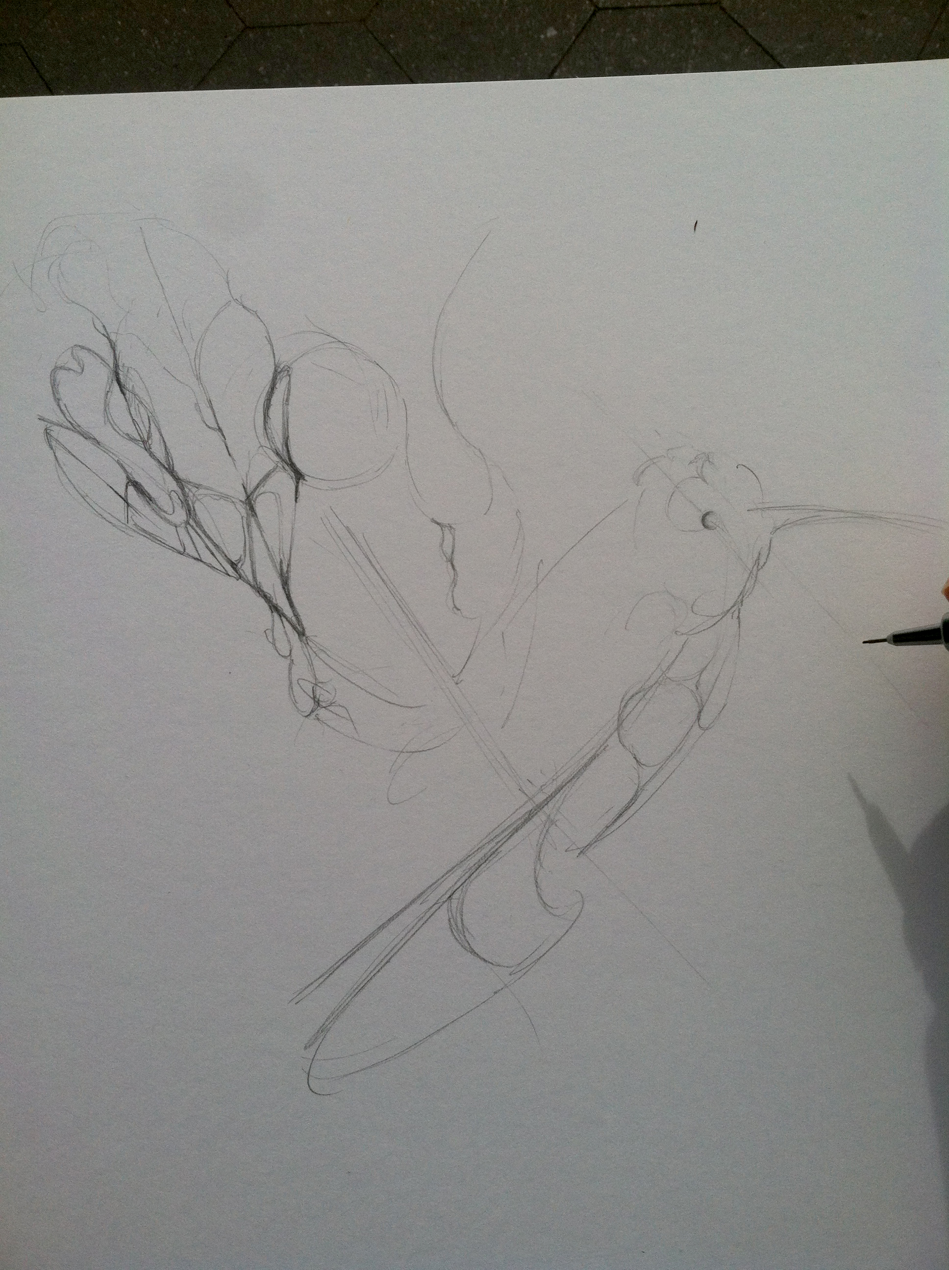 Establishing general shape and idea of the drawing