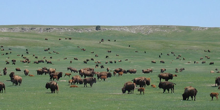BisonBison Co. in Rapid City, SD, is one of the farms AgLocal works with. | Photo Credit:  AgLocal