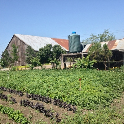 Local Seattle Farm  | Foodable WebTV Network