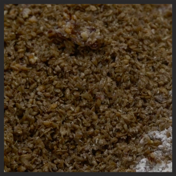 Spent grain from Funky Buddha Brewery