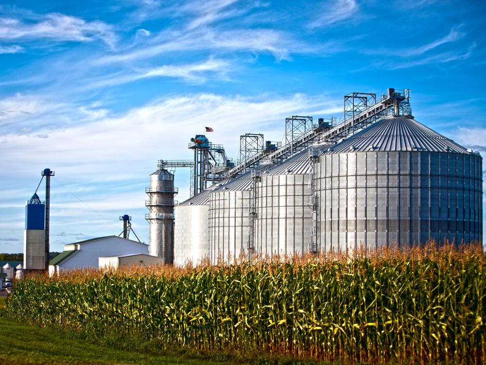 American corn farm