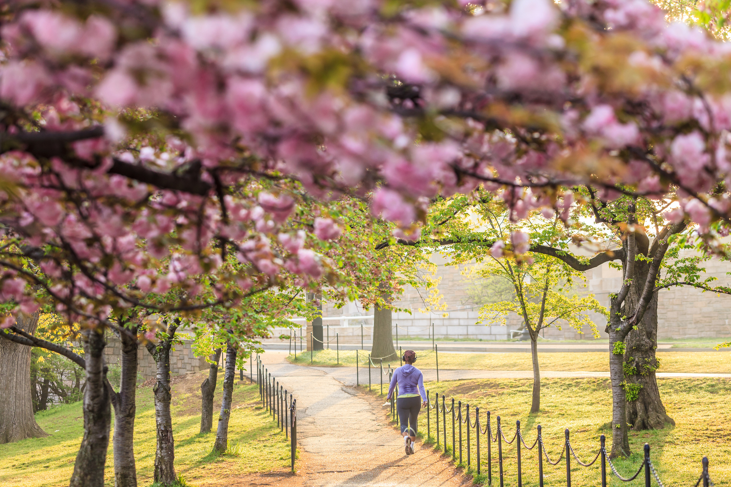 What's more picturesque than a jog amid Washington, DC's cherry blossoms in spring?