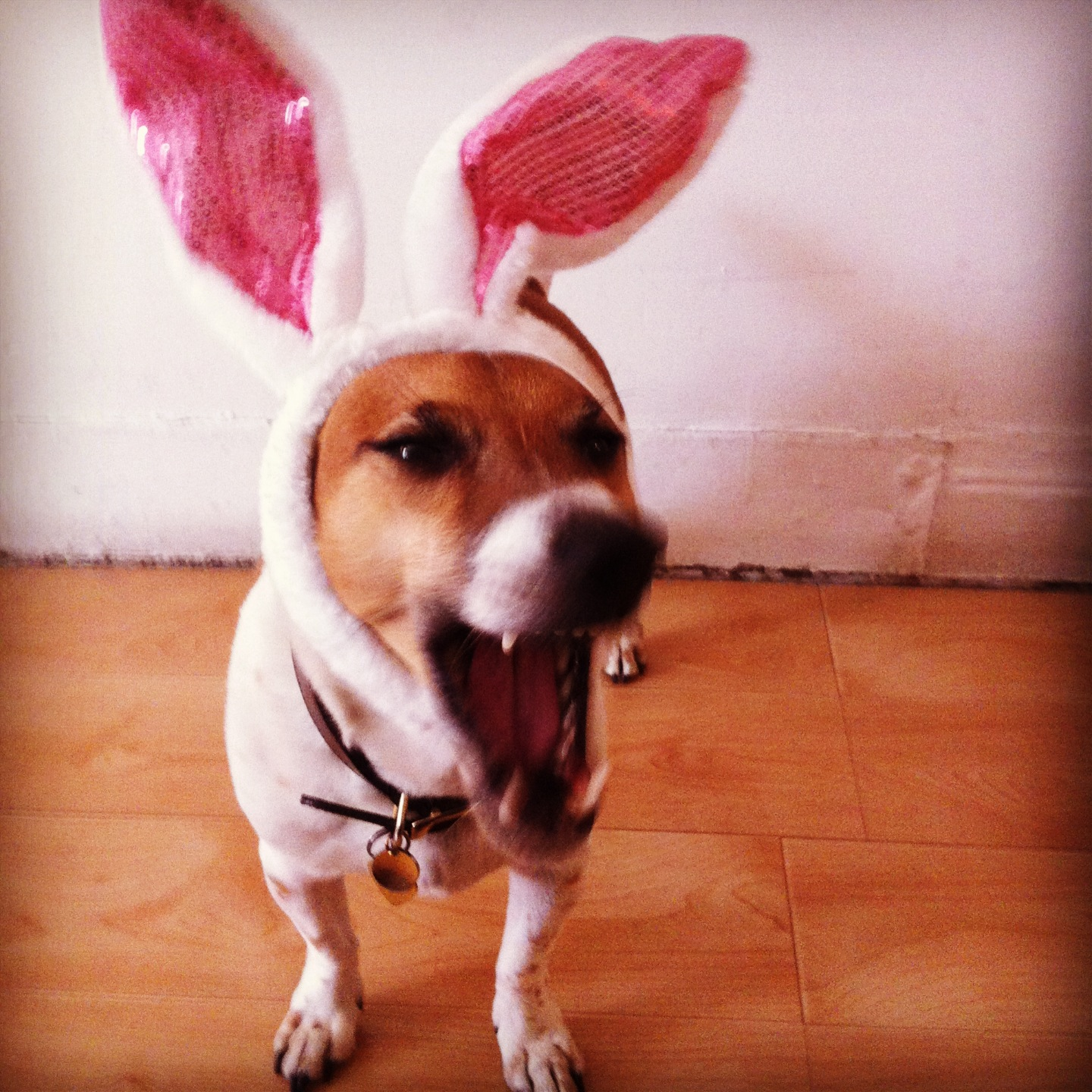 Scooter in Bunny Ears