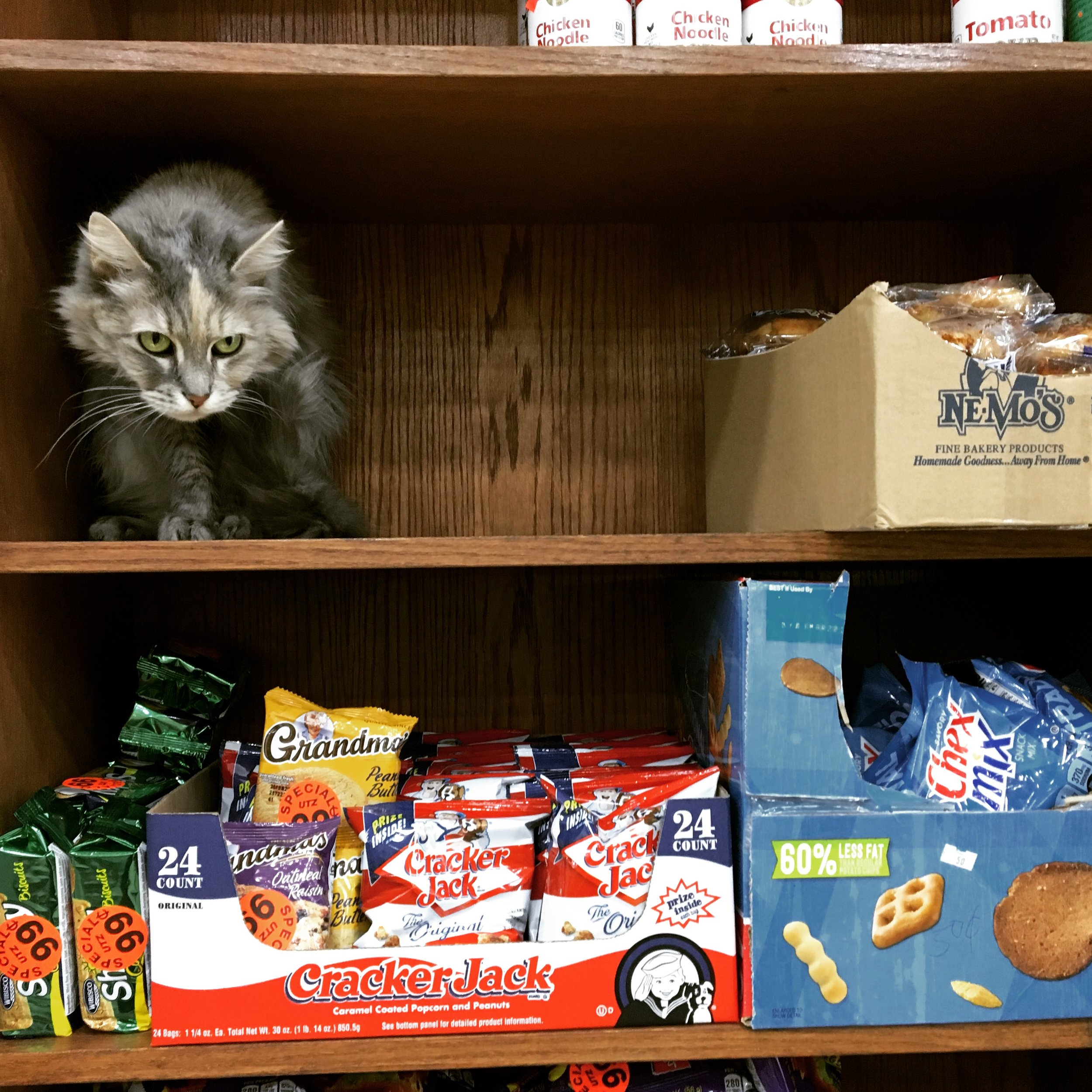 Cat on shelf at deli, NYC