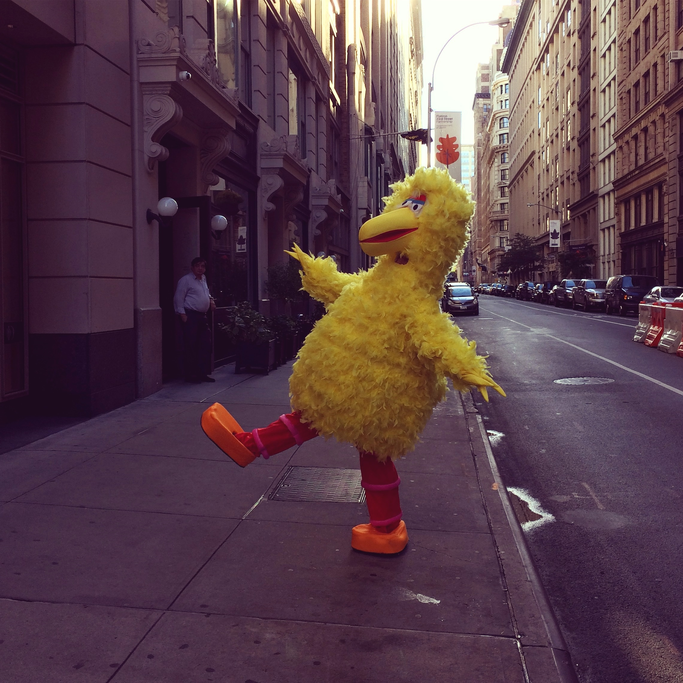 Big Bird, NYC