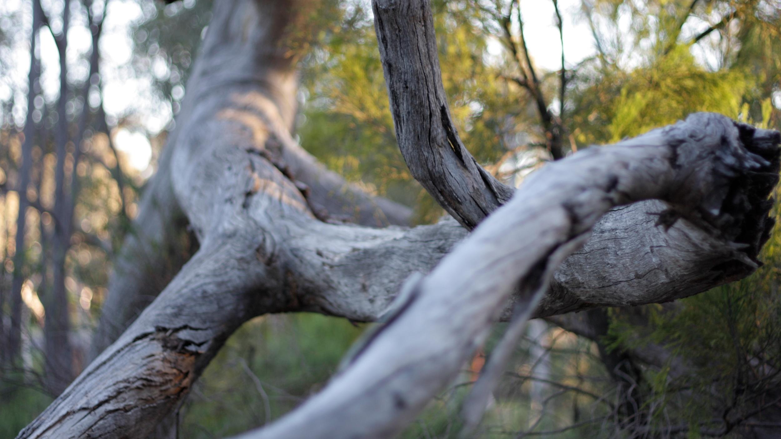 bush (13).jpg