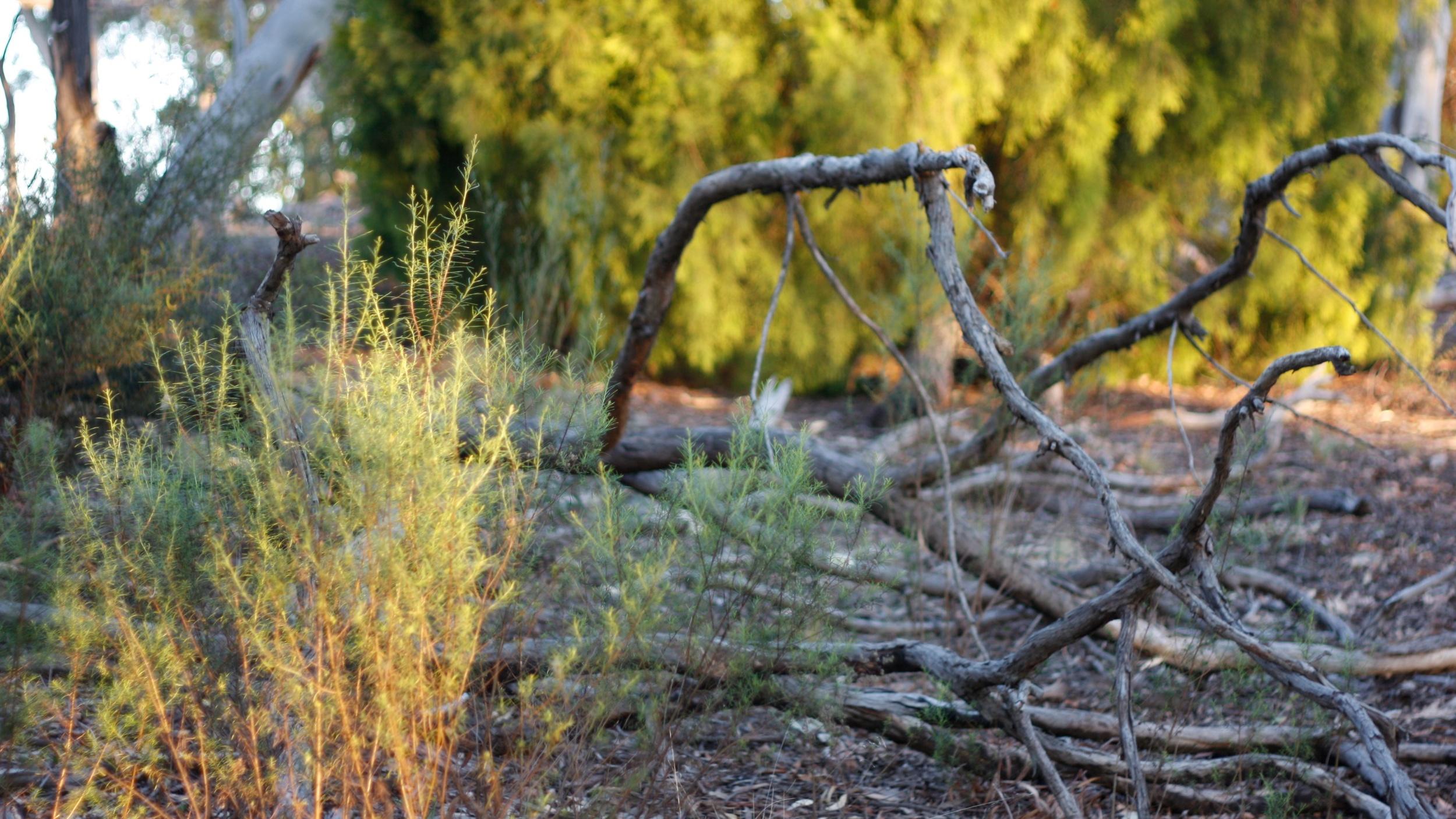 bush (12).jpg