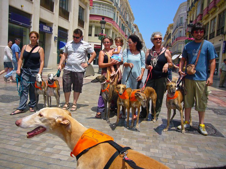 Larios Galgo Walk second group shot