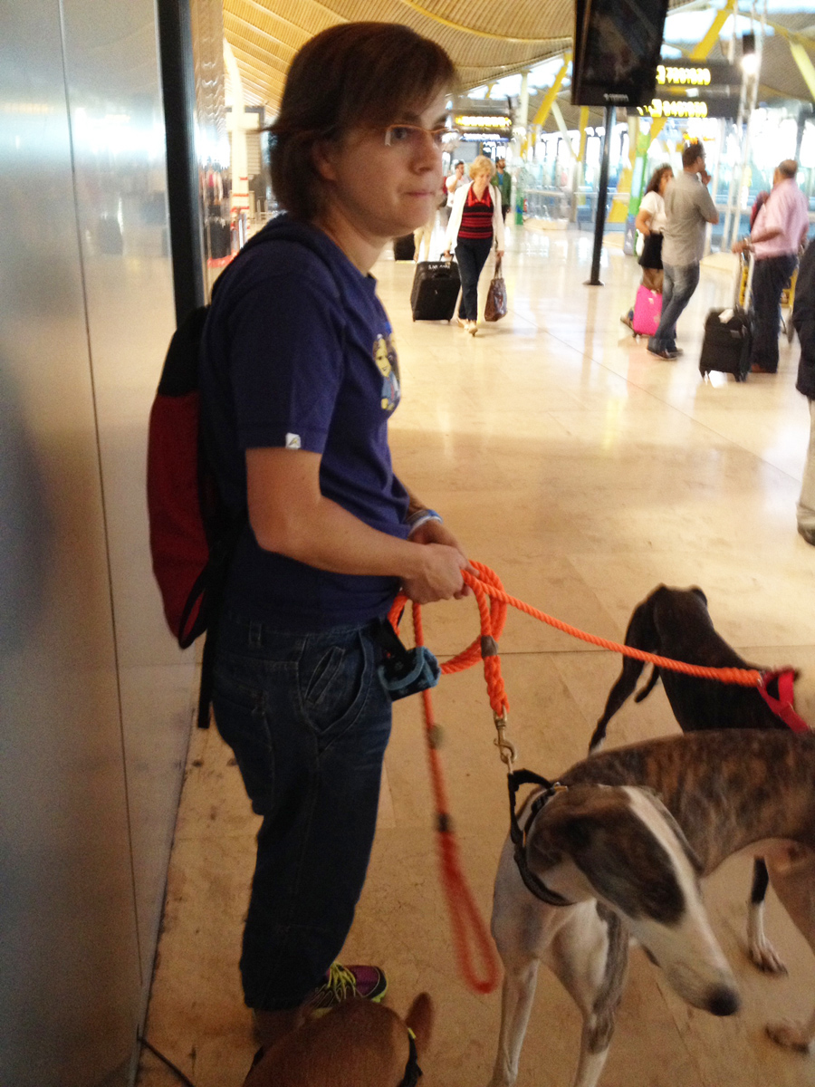 Sam, waiting patiently with GRIN dogs at the Madrid airport