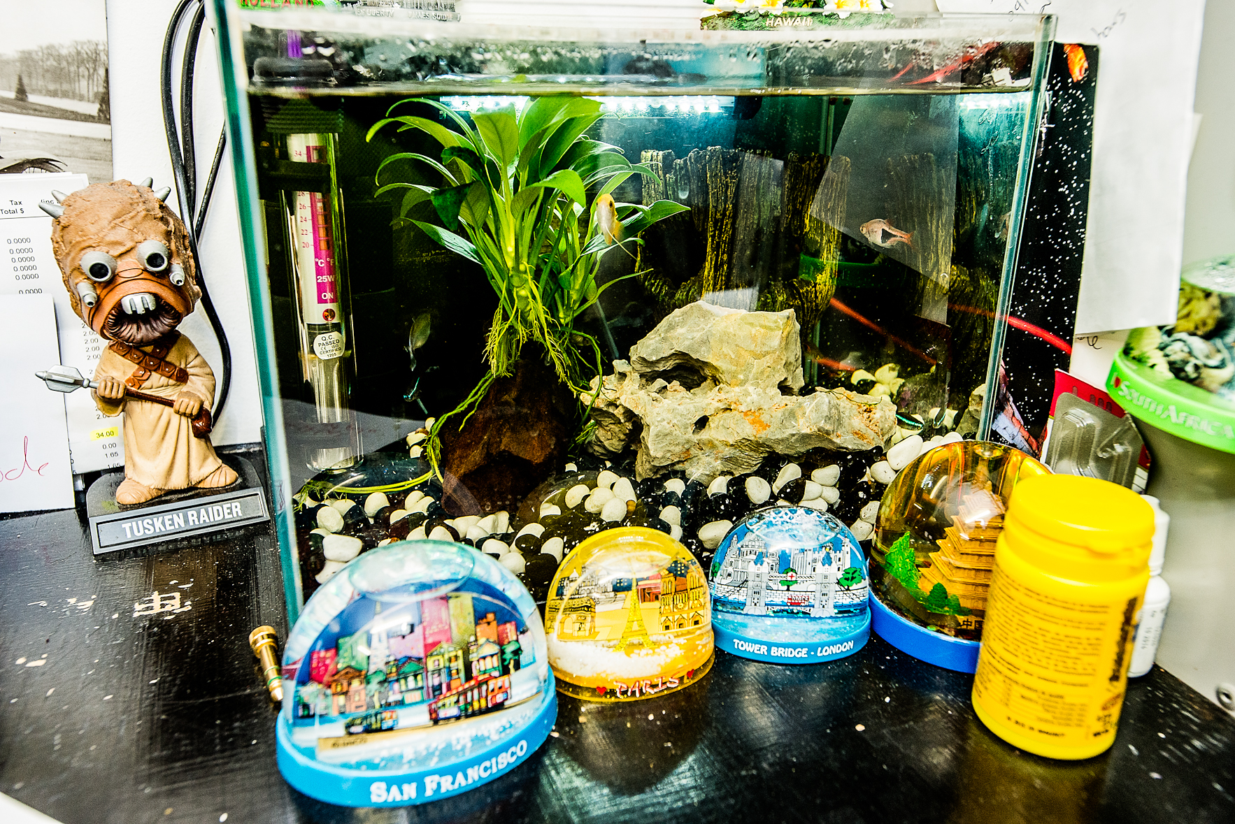 Office Fish Tank : Record Store, Darlinghurst.