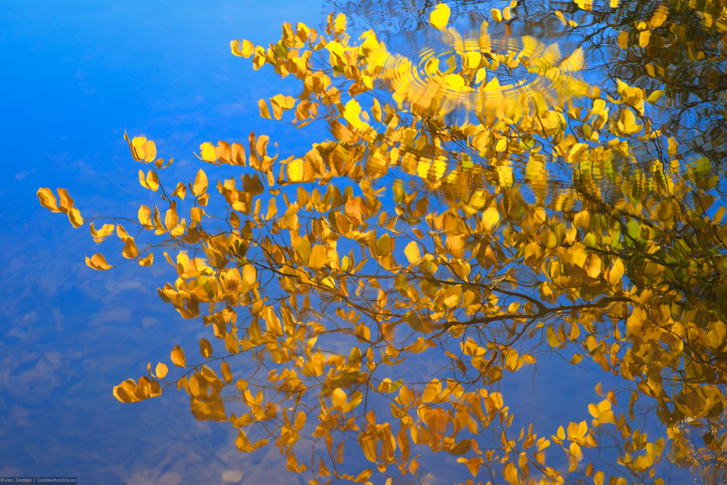 It is the branch with leaves mirrored on the water...